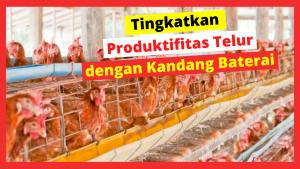 Kandang Ternak JOPER 5 1 HOBI TERNAK Model Kandang Ayam Petelur word1