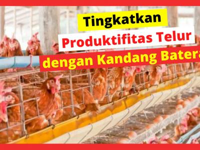 Kandang Ternak JOPER 5 1 HOBI TERNAK Model Kandang Ayam Petelur word3