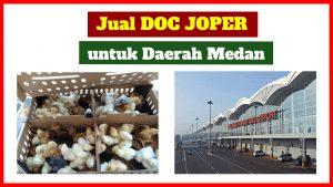 jual doc joper medan 300x169 1 HOBI TERNAK jual doc word3