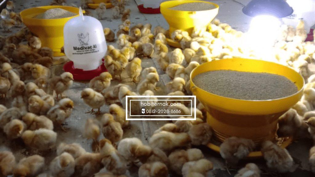 Penyakit kapan saja dapat mendekat ke ayam, hal yang harus diperhatikan untuk mencegah penyakit pada ayam yaitu kebersihannya.