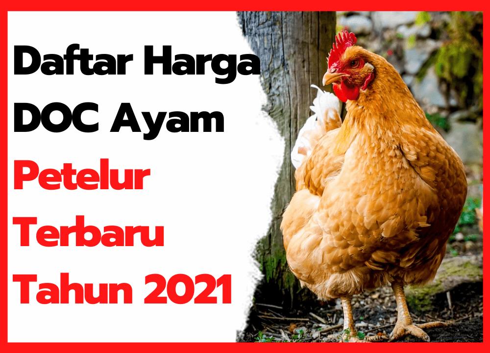Daftar Harga DOC Ayam Petelur Terbaru Tahun 2021 | thumbnail