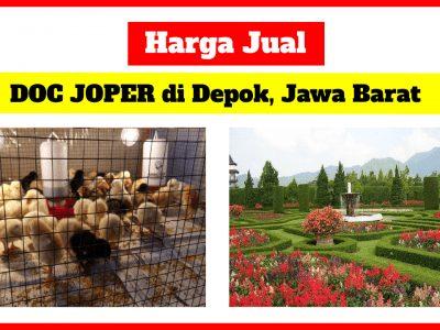 harga doc joper di Depok Jawa Barat 400x300 1 HOBI TERNAK doc ayam joper depok word3