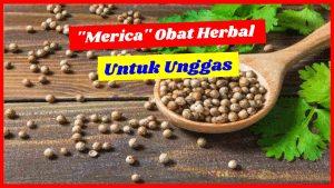 merica obat herbal unggas