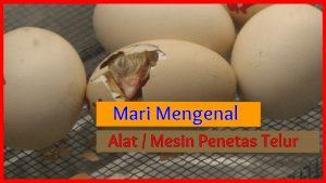 Jual Mesin Penetas Telur