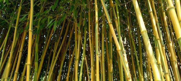 Dalam pembuatan kandang domba bisa menggunakan bahan dasar bambu
