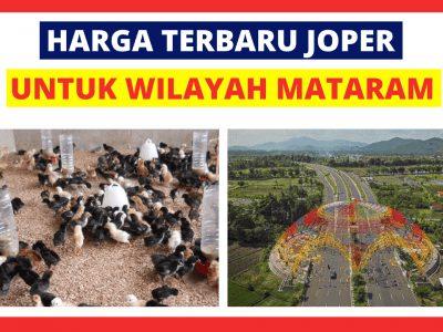 Joper Mataram 400x300 1 HOBI TERNAK word3