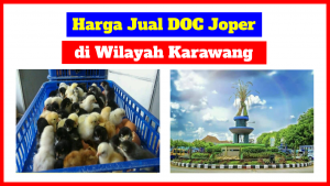 doc joper di karawang