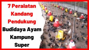 7 Peralatan Kandang Pendukung Budidaya Ayam Kampung Super | Cover