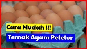 Telur Ayam mengandung gizi yang baik untuk pertumbuhan manusia. Dua butir telur ayam cukup memberikan 13 gram protein, 9,5 gram lemak, 56 mg kalsium, dan 1,8 mg zat besi yang di butuhkan oleh tubuh.