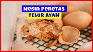 6 Hal Penting Tentang Mesin Penetas Telur Ayam