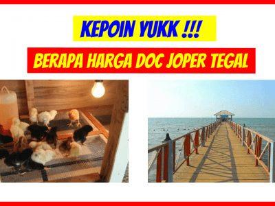 harga doc joper tegal 400x300 1 HOBI TERNAK Bibit Ayam Kampung Super word1