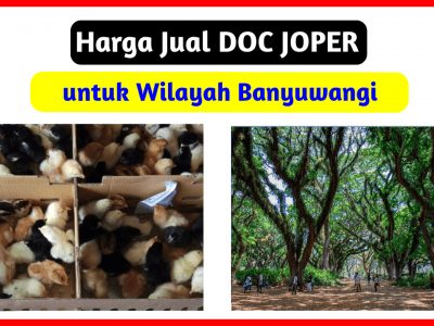 harga jual doc joper ke banyuwangi 400x300 1 HOBI TERNAK doc joper banyuwangi word3
