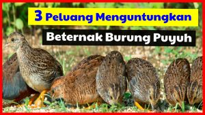 3 Peluang Menguntungkan Beternak Burung Puyuh