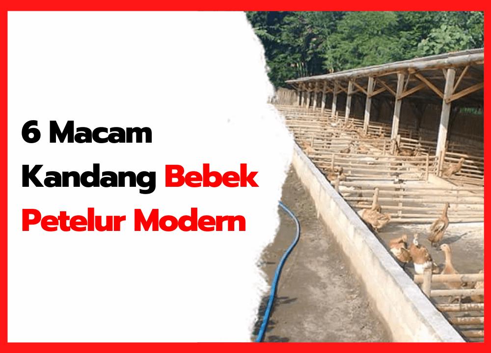 6 Macam Kandang Bebek Petelur Modern | cover