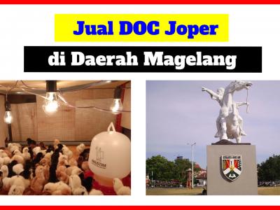 Harga Jual DOC atau Bibit Ayam Kampung Super (JOPER) untuk Daerah Magelang