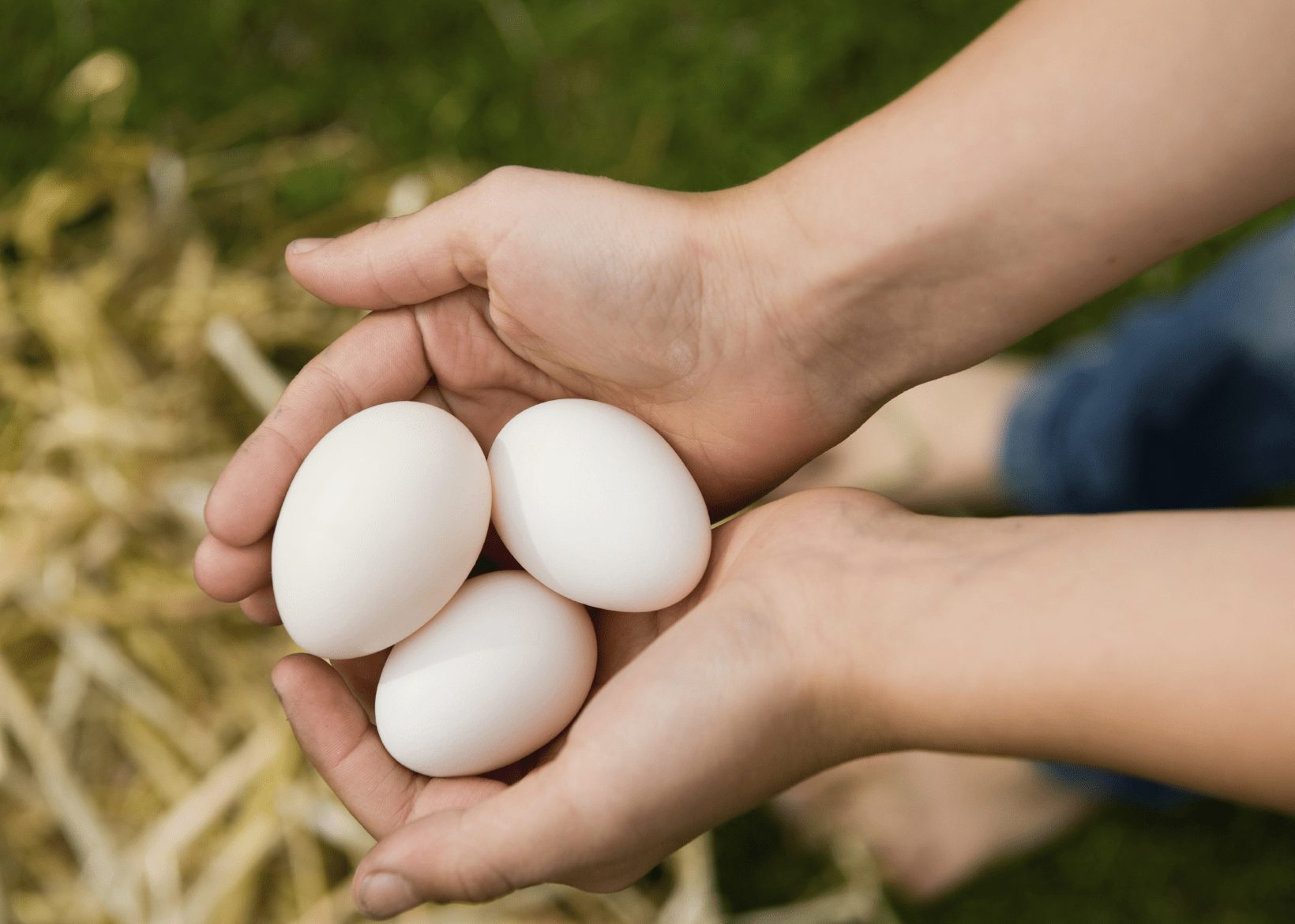 Polish chicken eggs color is white, they can produce eggs about 150 eggs per year.
