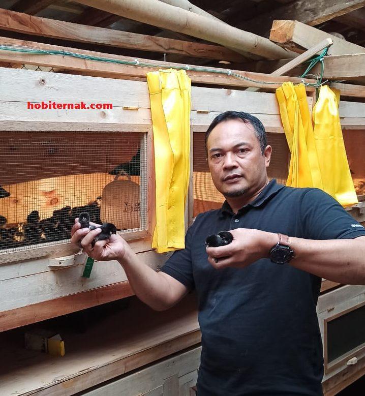 Contoh kandang black joper milik Pak Ali - Bandung. Pemesanan DOC di hobiternak.com | Image 7