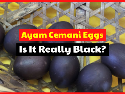 Do you feel curious about ayam cemani chicken eggs? Is the color black?