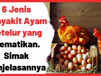 6 Jenis Penyakit Ayam Petelur yang Mematikan. Simak Penjelasannya | Cover