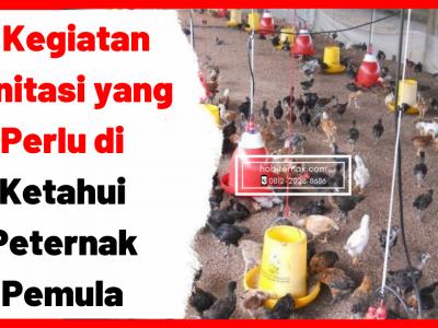 5 Kegiatan Sanitasi yang Perlu di Ketahui Peternak Pemula | gambar 1
