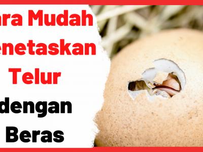 Cara Mudah Menetaskan Telur dengan Beras | Cover