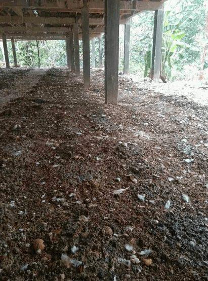 Limbah kotoran ayam dapat dijadikan sebagai sumber pendapatan bagi peternak | image 2