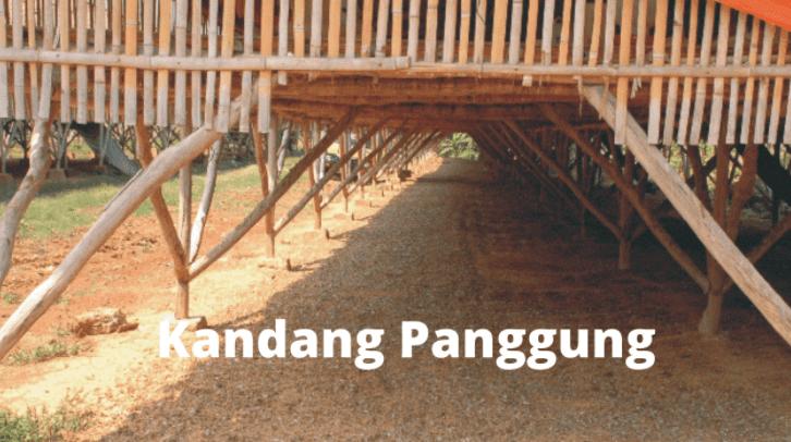 Kandang ayam kampung super sistem panggung | Image 4