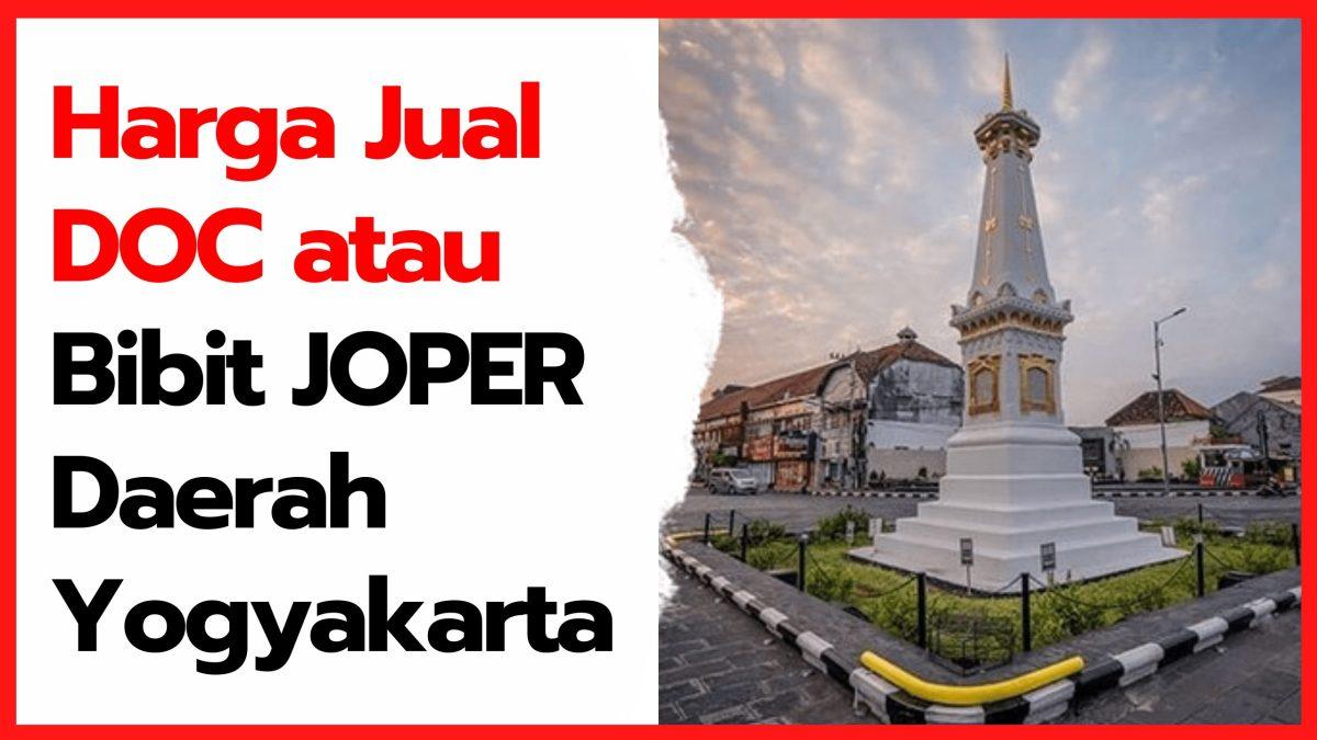 Harga Jual DOC atau Bibit Ayam Kampung Super (JOPER) untuk Daerah Yogyakarta