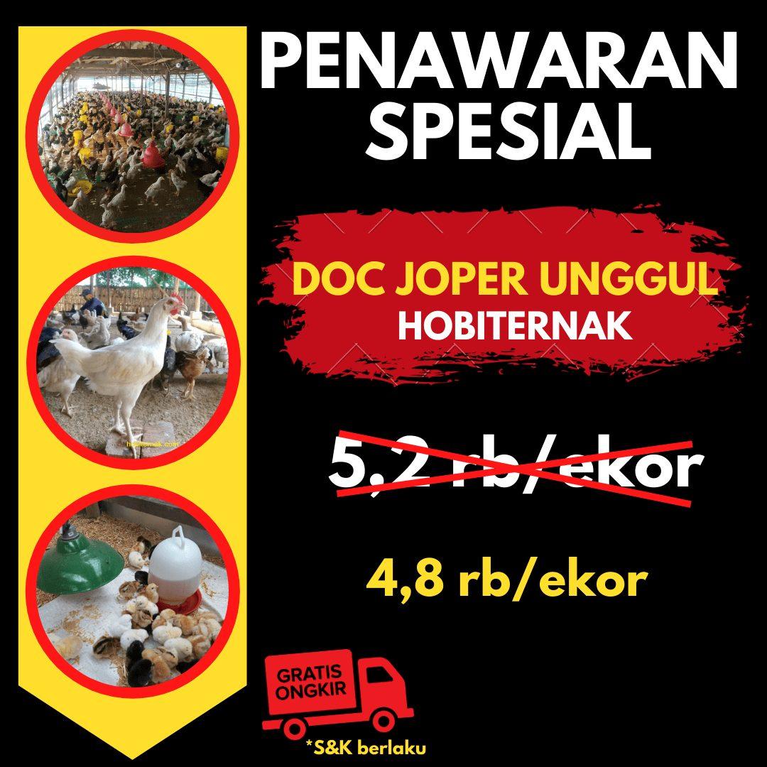 Promo Ayam Kampung Super Joper Harga 4,8rb per ekor