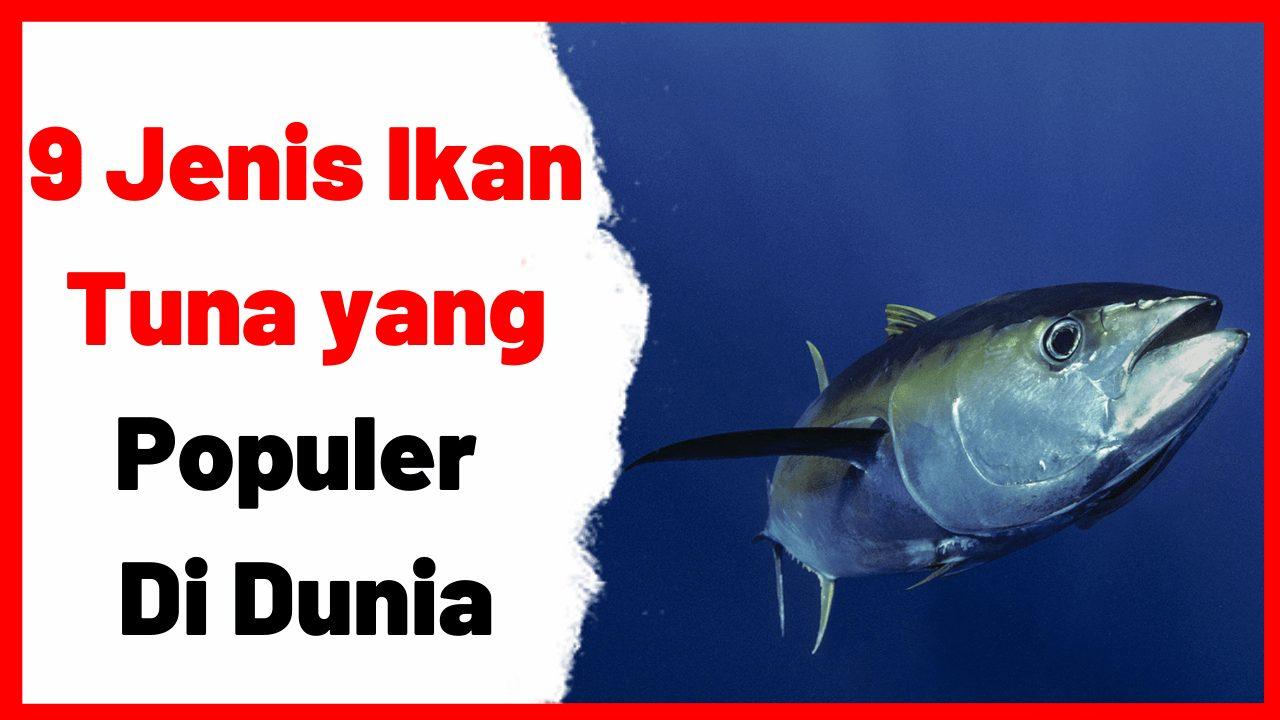 9 Jenis Ikan Tuna yang Populer di Dunia | cover