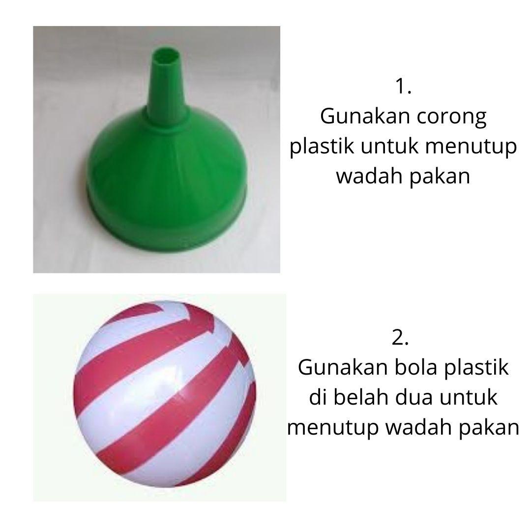Gunakan corong plastik atau bola plastik yang di belah dua untuk menutup wadah pakan ayam joper