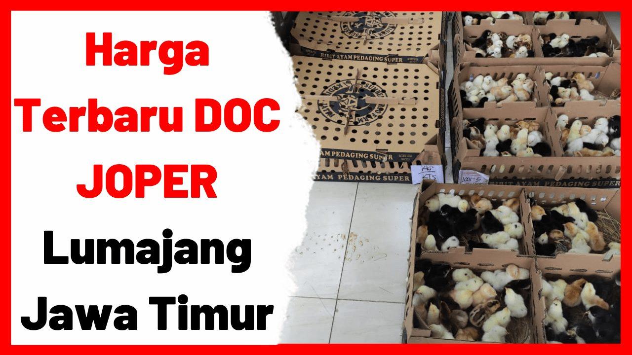 Harga Terbaru DOC JOPER Lumajang, Jawa Timur   image 1