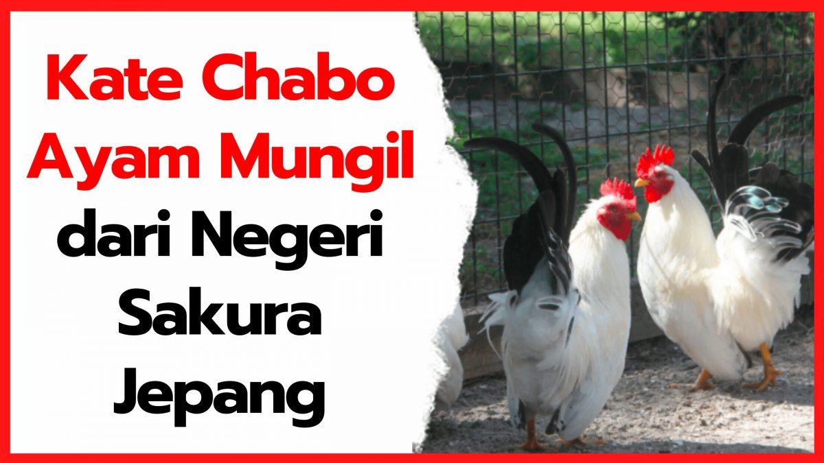 Kate Chabo Blacktail - Ayam Mungil dari Negeri Sakura Jepang   cover