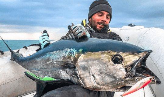 Tuna Sirip Biru Selatan | image 8