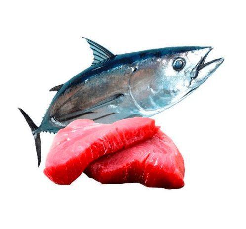 Daging Ikan Tuna mengandung berbagai gizi & vitamin yang baik untuk kesehatan manusia | image 1