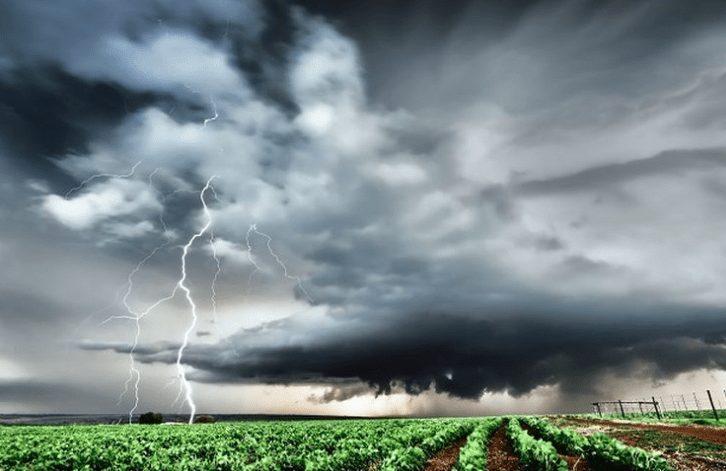 Kegagalan bisnis ternak ayam petelur juga dapat disebabkan oleh cuaca yang ekstrem | Image 8