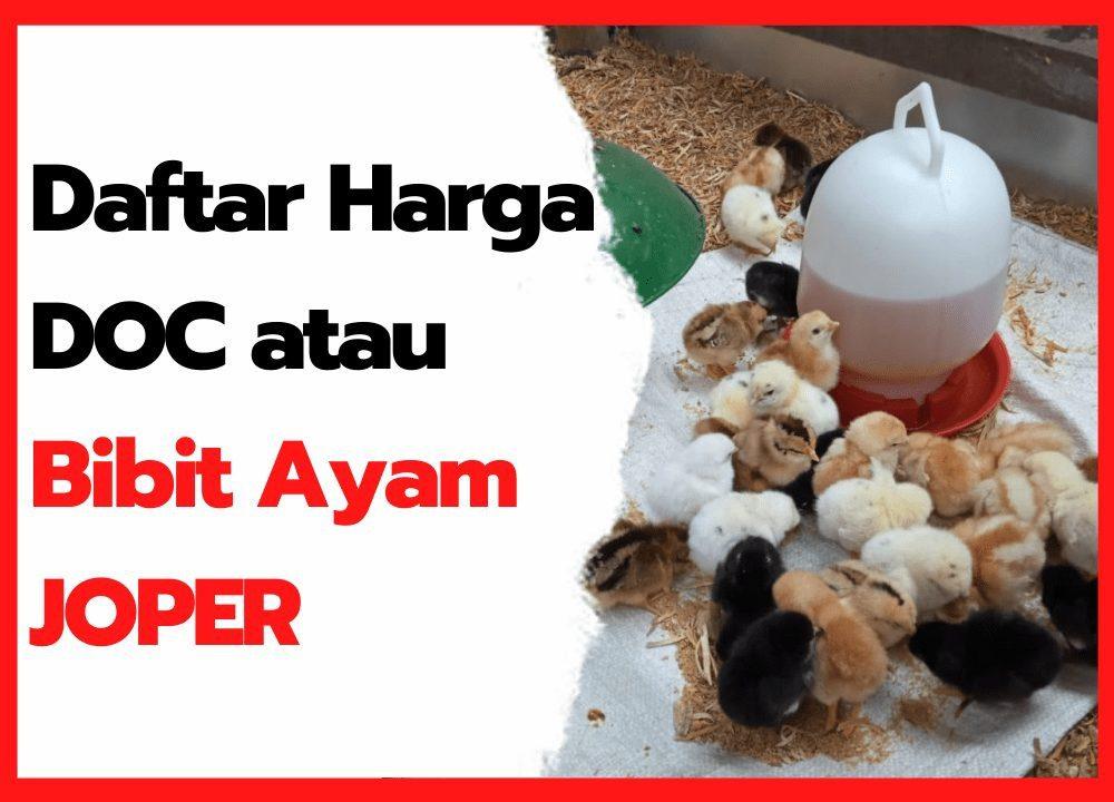 √ Murah !!! Harga DOC Joper (Ayam Kampung Super) Tahun 2021