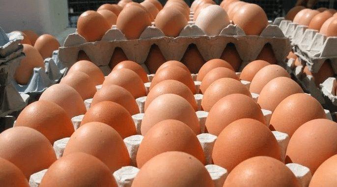 Keberhasilan ternak ayam petelur akan terlihat jika ayam selalu dalam keadaan sehat dan jumlah produktivfitas telur menjadi meningkat | image 5