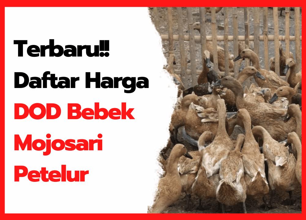 Terbaru!! Daftar Harga DOD Bebek Mojosari Petelur   cover