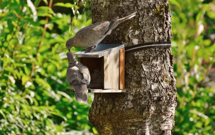 Burung merpati sering disebut sebagai lambang kesetiaan | Image 8