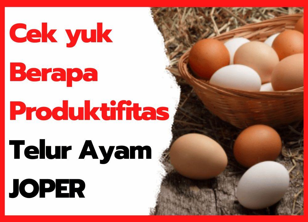 Cek yuk Berapa Produktifitas Telur Ayam JOPER | cover