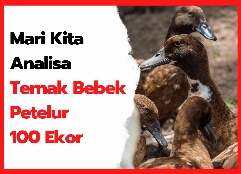Mari Kita Analisa Ternak Bebek Petelur 100 Ekor