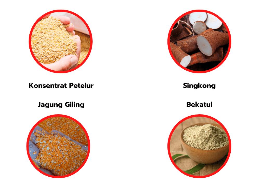 Berbagai bahan - bahan penyusun Pakan Ayam Kampung | image 2