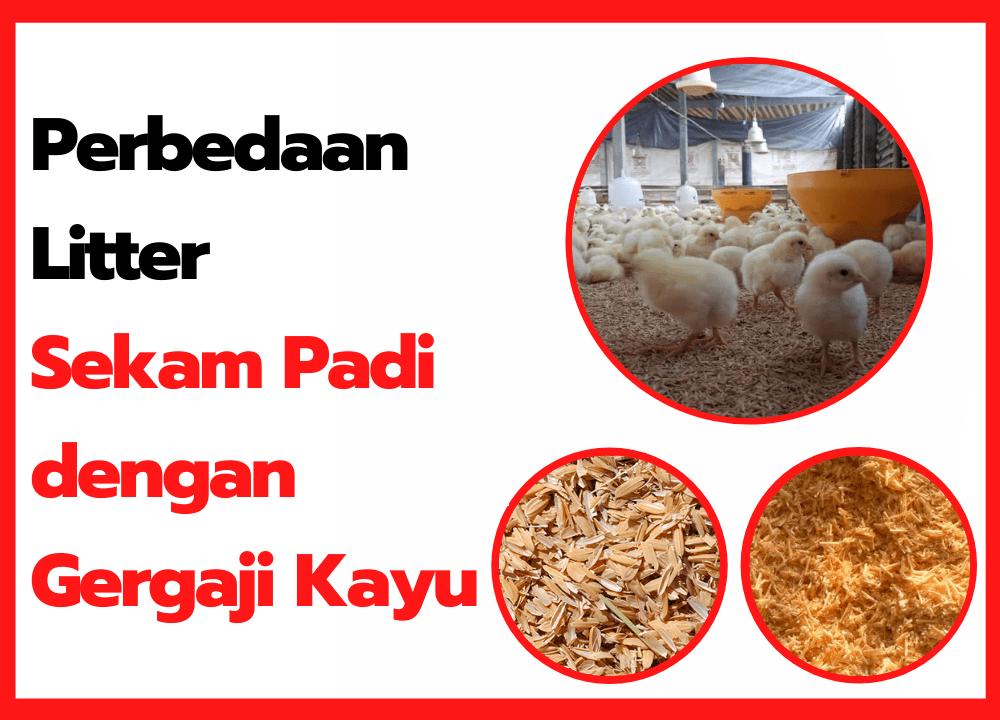 Perbedaan Alas Kandang Ayam Menggunakan Sekam Padi dengan Gergaji Kayu   thumbnail