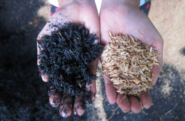 Foto sebelah kiri adalah contoh sekam yang sudah dilakukan proses pembakaran, dan siap untuk dijadikan alas kandang | Image 8