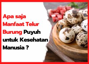 Apa saja Manfaat Telur Burung Puyuh untuk Kesehatan Manusia | cover