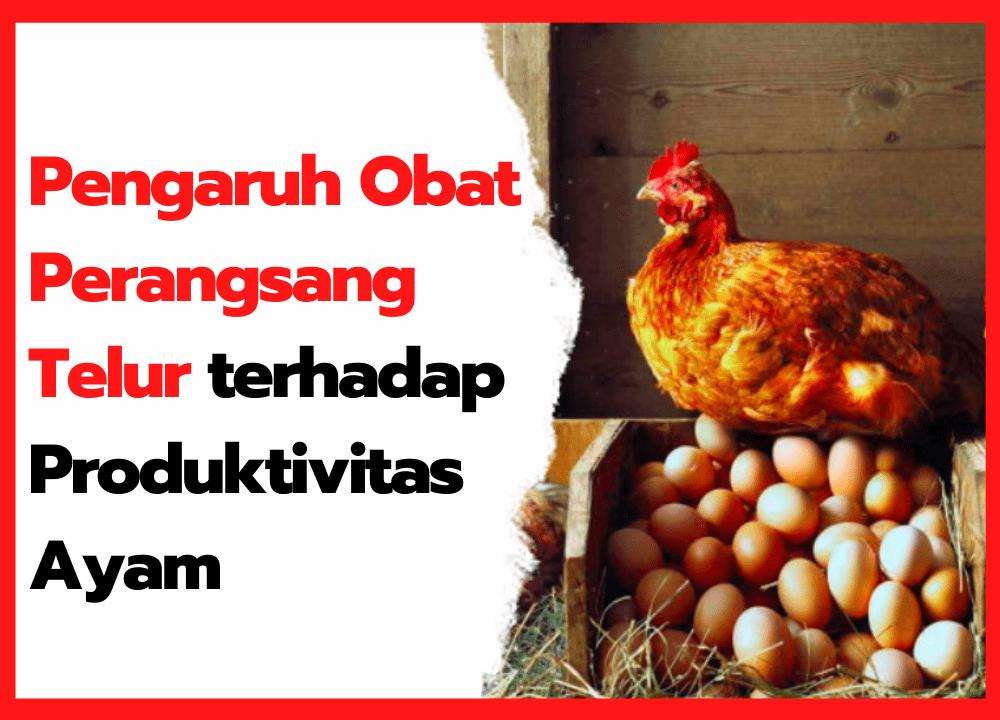 Pengaruh Obat Perangsang Telur terhadap Produktivitas Ayam | cover