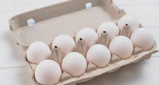 Produktivitas telur yang cukup tinggi merupakan salah satu ciri ayam KUB sekaligus menjadi poin keunggulannya. | cybex.ipb.ac.id