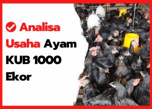 Analisa Usaha Ayam KUB 1000 Ekor | cover