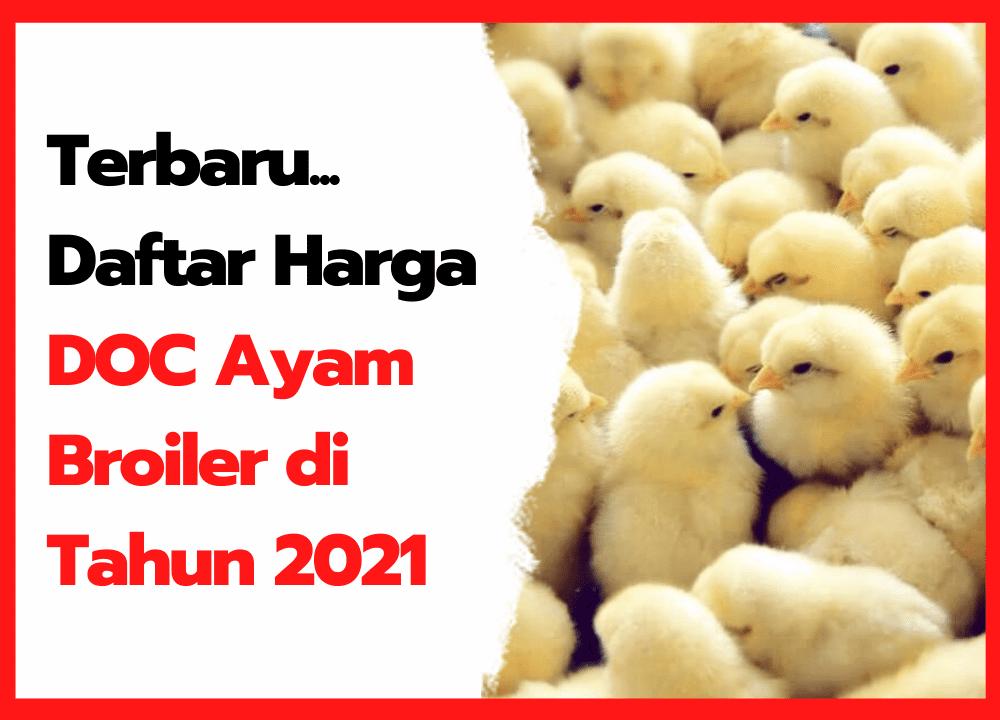 Daftar Harga DOC Ayam Broiler di Tahun 2021   thumbnail